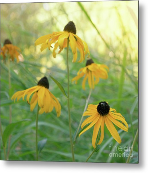 Metal Print featuring the photograph Sweet August by Cindy Garber Iverson