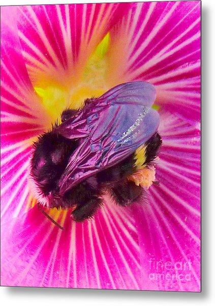 Sweet Bee Metal Print by JoAnn SkyWatcher