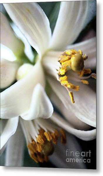 Sweet Fragrance 2 Metal Print