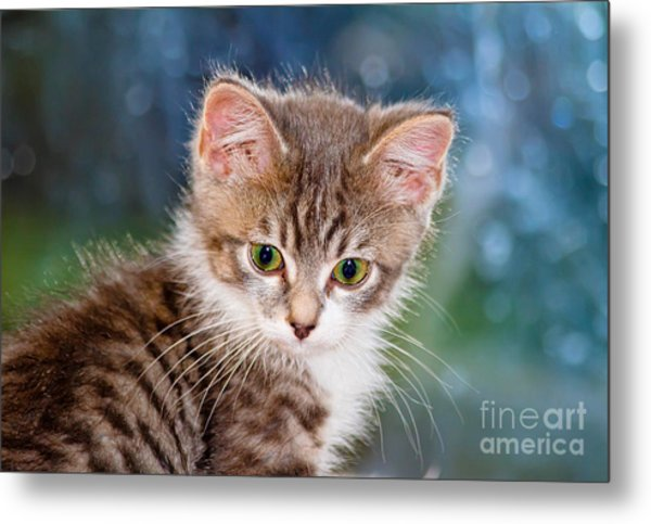 Sweet Kitten Metal Print