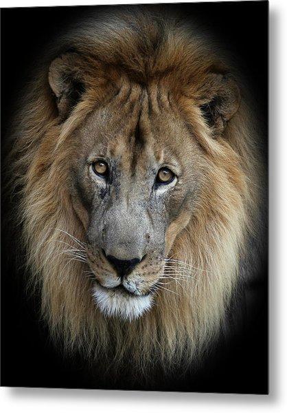 Sweet Male Lion Portrait Metal Print