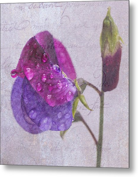 Sweet Pea Raindrops Metal Print