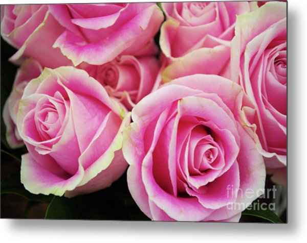 Sweet Rose For All The Lovely Ladies Who Comment On My Work Metal Print