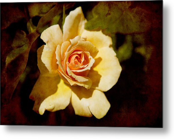 Sweet Rose Metal Print