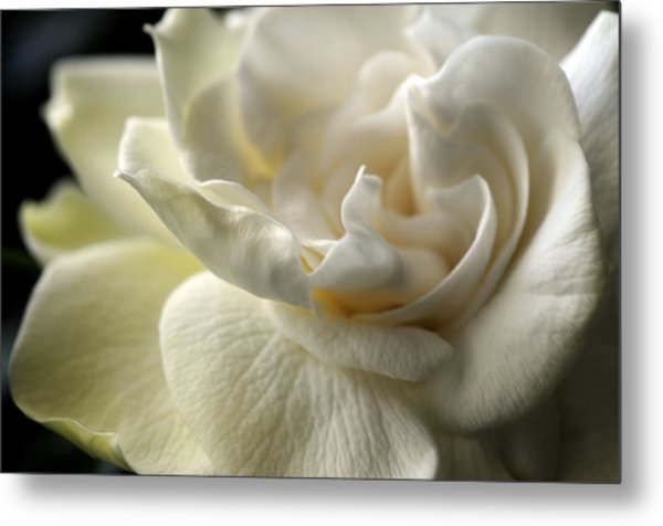 Sweet Smell Of Love Metal Print