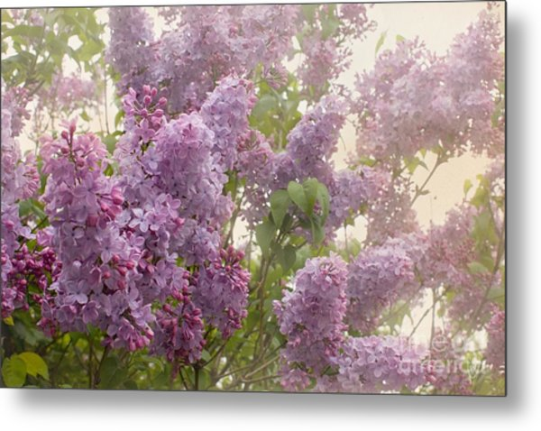 Swimming In A Sea Of Lilacs Metal Print
