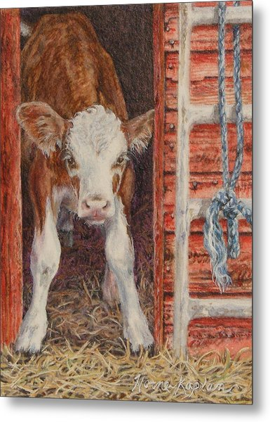 Swiss Calf, Got Milk? Metal Print