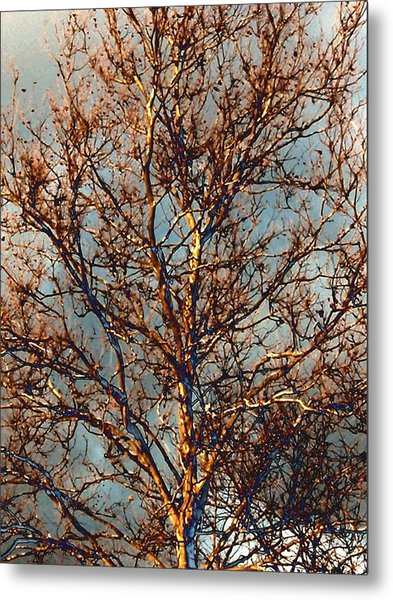 Sycamore Against November Sky Metal Print by Beth Akerman