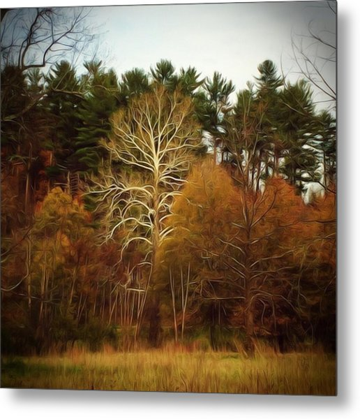Sycamore And Pines Metal Print