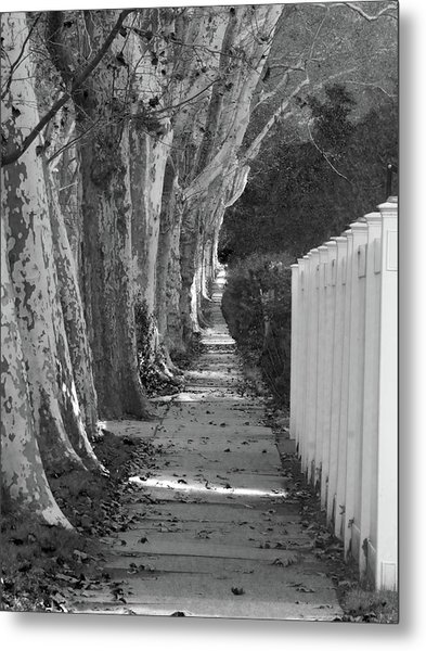 Sycamore Walk-grayscale Version Metal Print