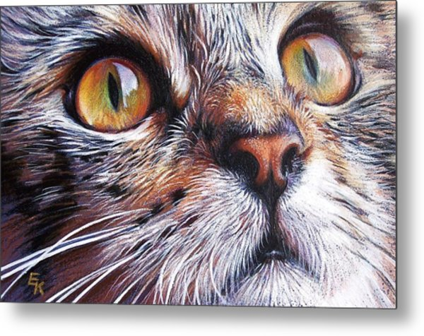 Tabby Look 2 Metal Print