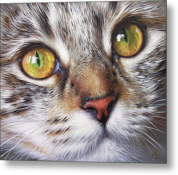 Tabby Look Metal Print