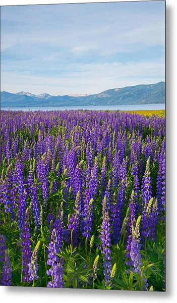 Tahoe In Summer Metal Print