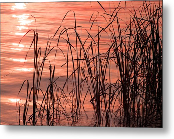 Tails Of Twilight Metal Print by Evelyn Patrick