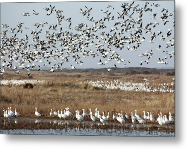 Take Flight 1 Metal Print