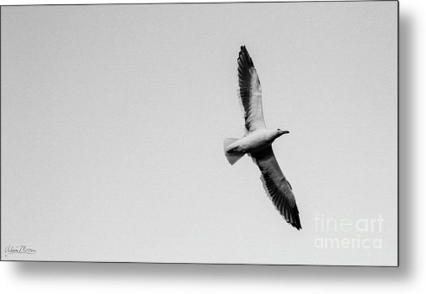 Take Flight, Black And White Metal Print