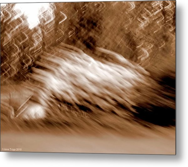Taken By Surprise Metal Print by Jane Tripp