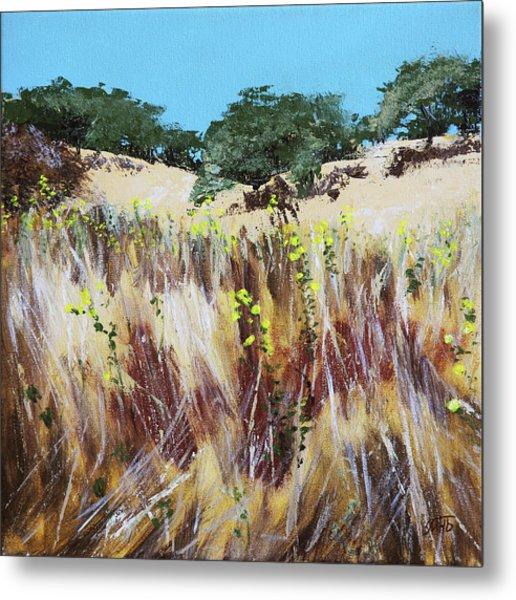 Tall Grass. Late Summer Metal Print