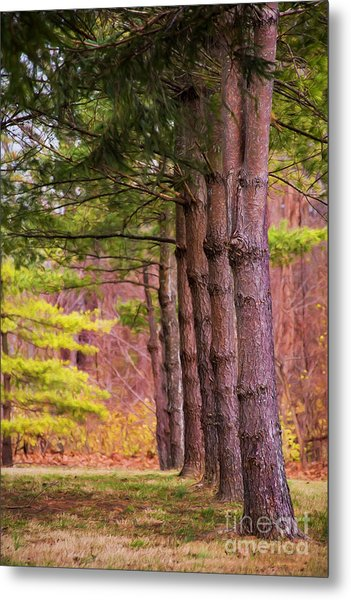 Tall Pines Standing Guard Metal Print