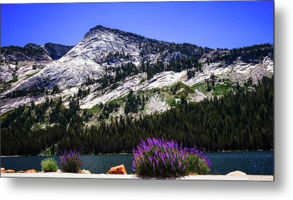 Tanaya Lake Wildflowers Yosemite Metal Print