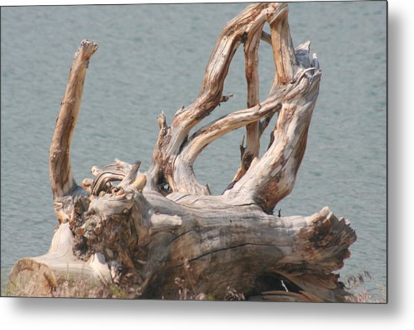 Tangled Metal Print by Amy Holmes