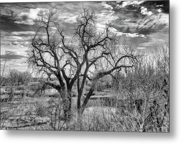 Metal Print featuring the photograph Tangled Old Tree On Platte River by Philip Rodgers
