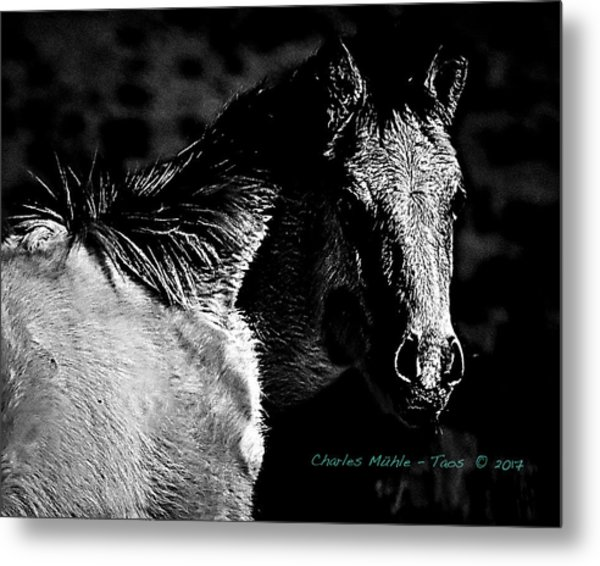 Taos Pony In B-w Metal Print