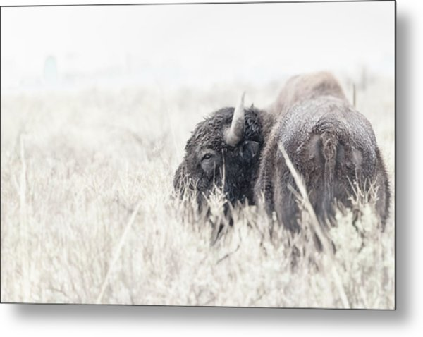 Metal Print featuring the photograph Tatanka by Philip Rodgers
