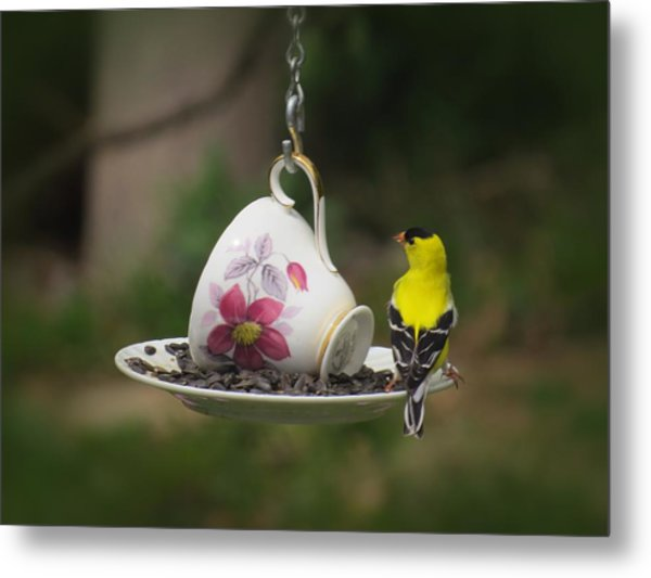 Teacup Finch Metal Print