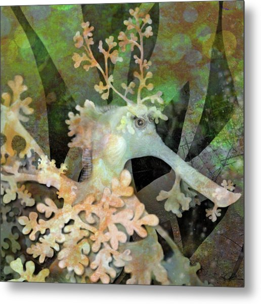Teal Leafy Sea Dragon Metal Print
