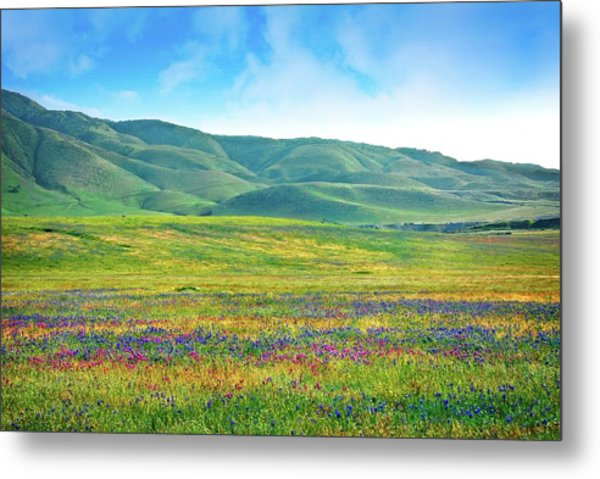 Tejon Ranch Wildflowers Metal Print