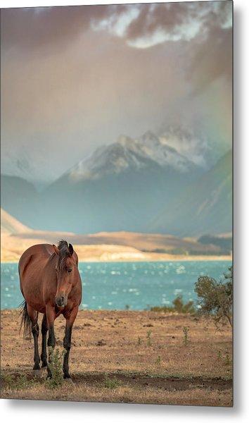 Tekapo Horse Metal Print