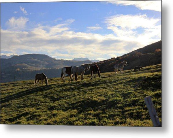 Telluride Mountain Herd Metal Print