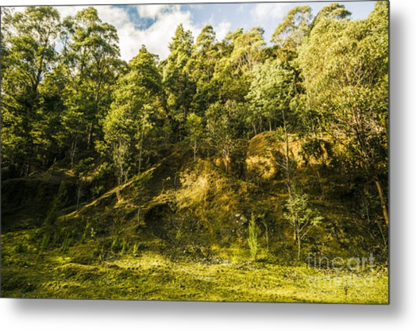Temperate Rainforest Scene Metal Print