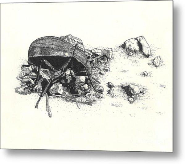 Darkling Beetle Metal Print