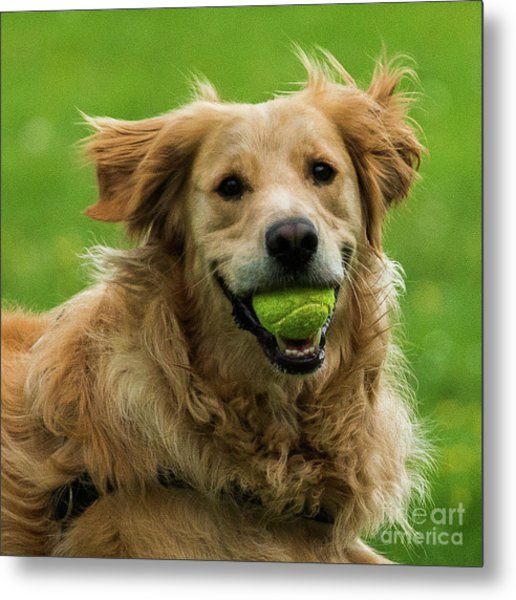 Tennis Is On ..wanna Play? Metal Print