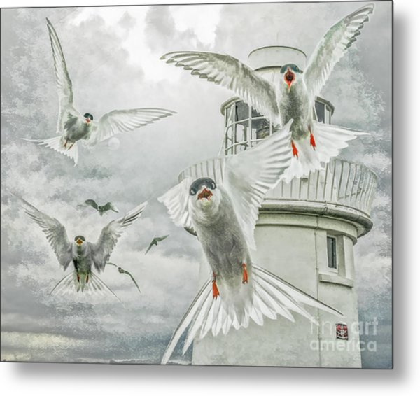 Tern Attack Metal Print