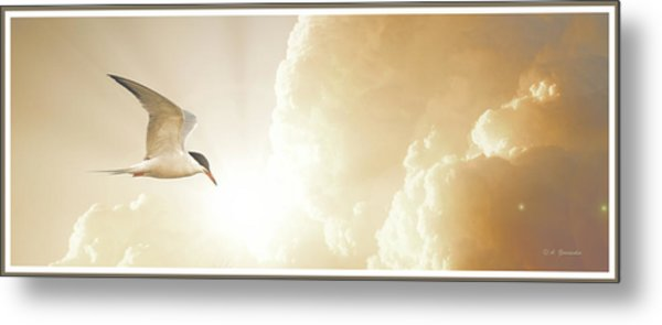 Tern In Flight, Spiritual Light Of Dusk Metal Print