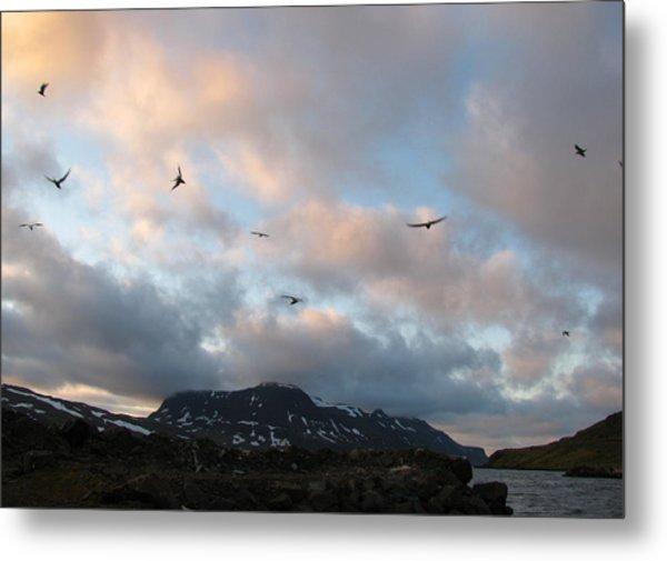 Terns At Midnight Metal Print by Sidsel Genee