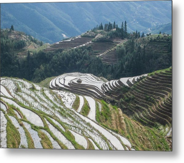 Terrace Fields Scenery In Spring Metal Print
