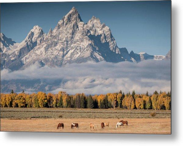 Teton Horses Metal Print