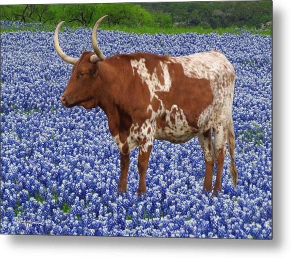 Da227 Tex And The Bluebonnets Daniel Adams Metal Print