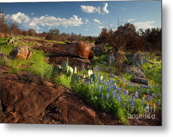 Texas Blue Bonnets And Cactus Metal Print