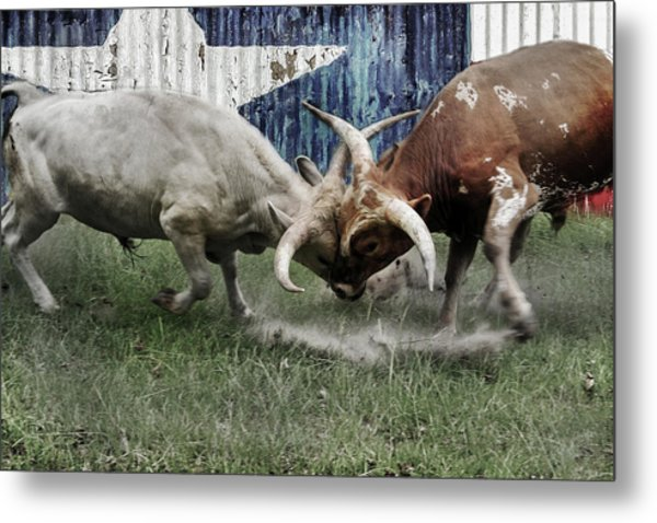 Texas Bull Fight  Metal Print