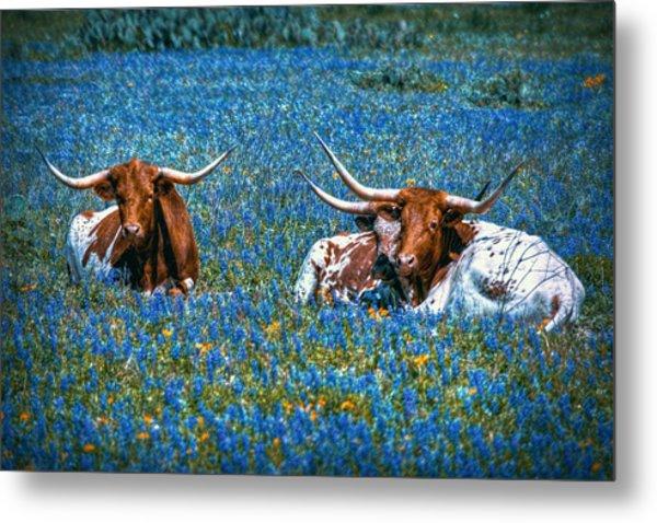 Texas In Blue Metal Print