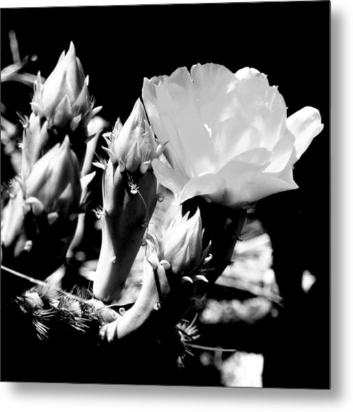 Texas Rose IIi Metal Print