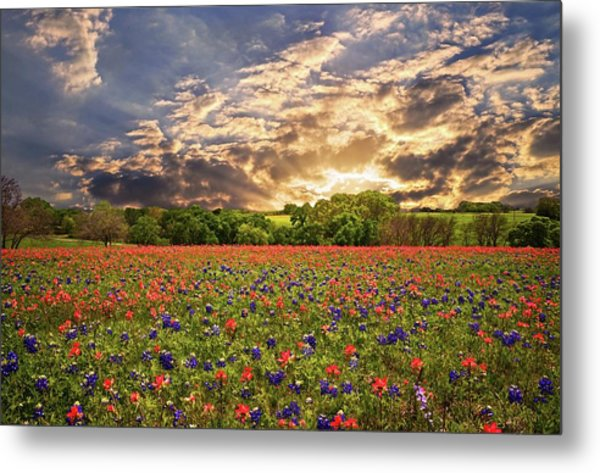 Texas Wildflowers Under Sunset Skies Metal Print