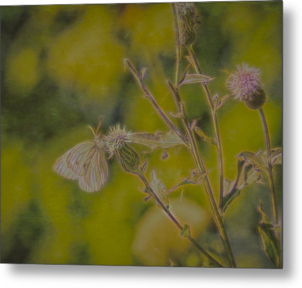 Metal Print featuring the photograph Textured Butterfly 1   by Leif Sohlman