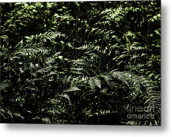 Textures Of A Rainforest Metal Print