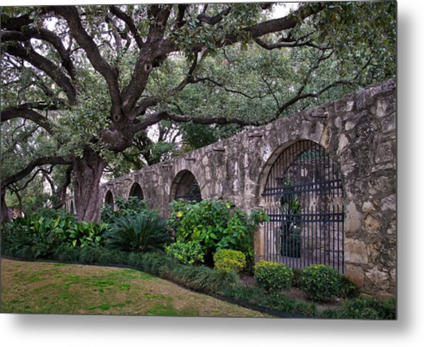 The Alamo Oak Metal Print